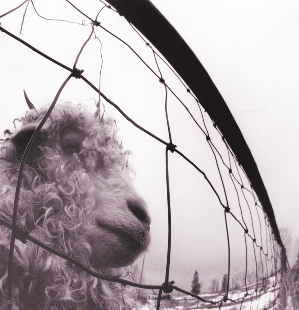 Vs – Vinyl - Pearl Jam
